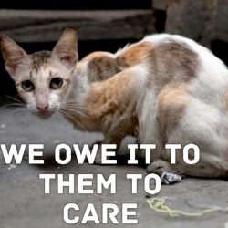 We have a duty to care for feral cats