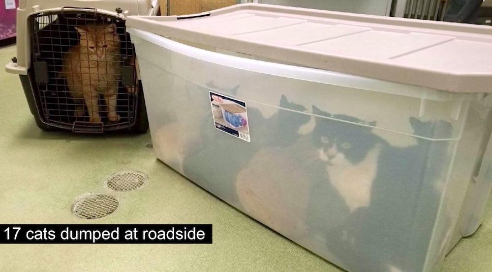 17 cats dumped at roadside D