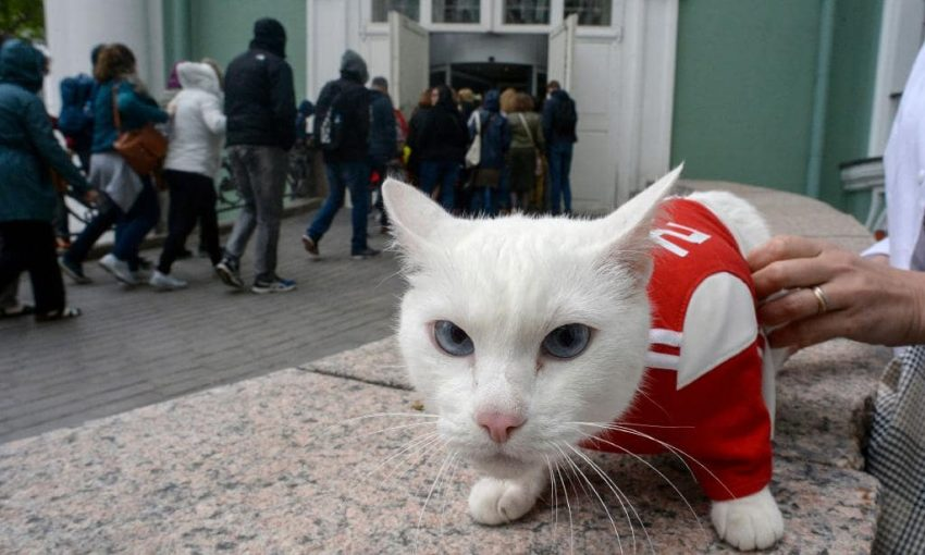 Achilles, the famous Hermitage cat who predicted World Cup Match results