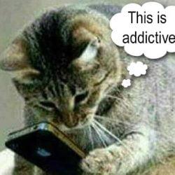 Addicted cat