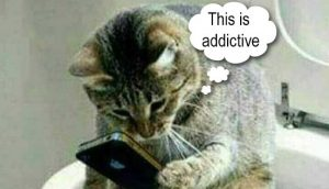 Addicted cat