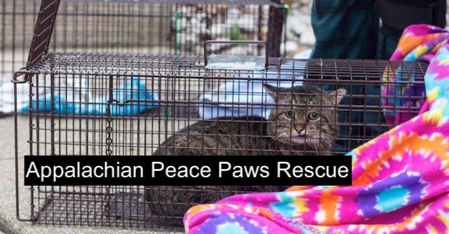 Appalachian Peace Paws Rescue