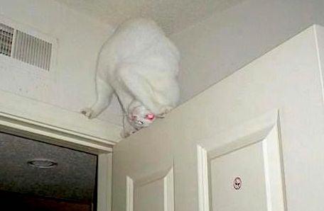 Cat Crazies Uk