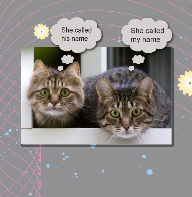 Domestic cats know the sound of their names