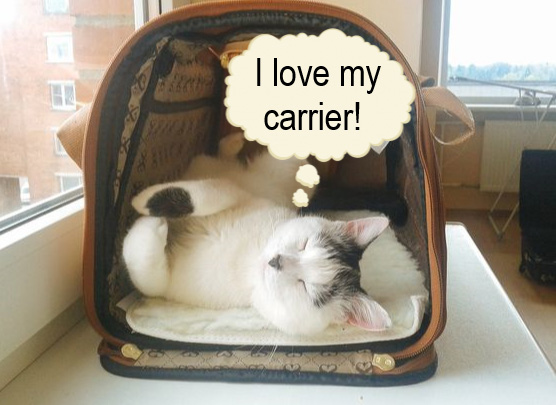 Cat loves carrier