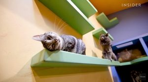 FIP awareness advocate builds an indoor playground for his 24 cats