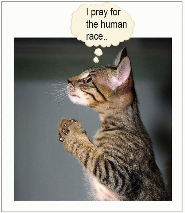 Cat praying for human race