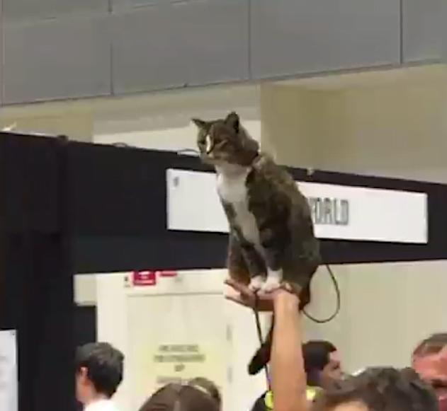 Cat royalty on a 'sedan chair'