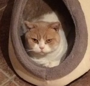 Cat was brained damaged during teeth cleaning