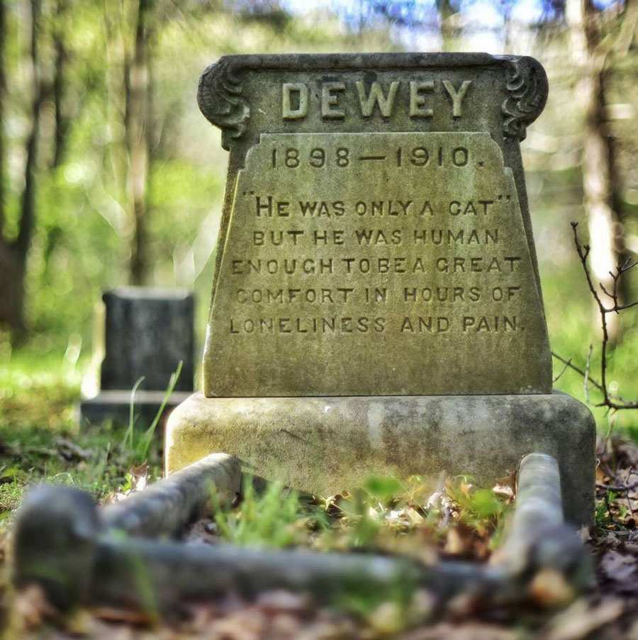 Dewey - a treasured and deceased cat companion