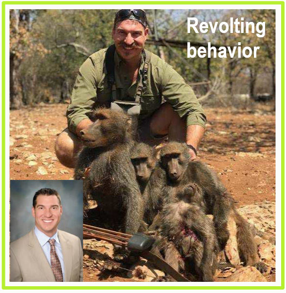 Family of baboons shot