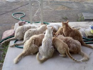 Feral cat colony feeding. The food resource is the reason for grouping.
