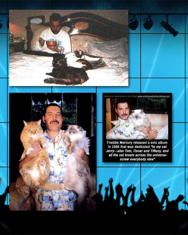 Freddie Mercury and cats