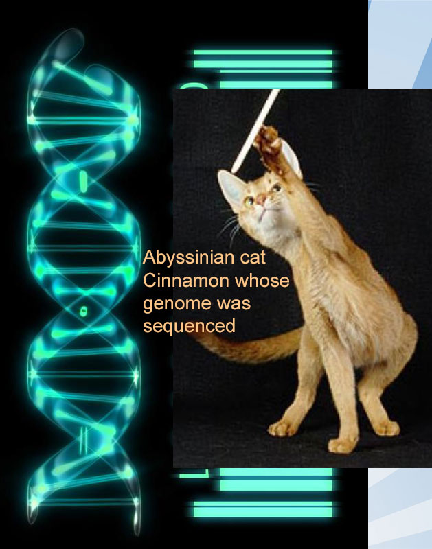 How many genes do cats have?