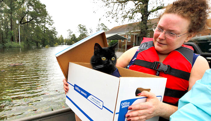Carla Ramm checks on her cat Jackjack after they were loaded onto a boat during their rescue from rising flood waters in the aftermath of Hurricane Florence, in Leland, North Carolina