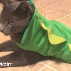 Kitty killed and mutilated