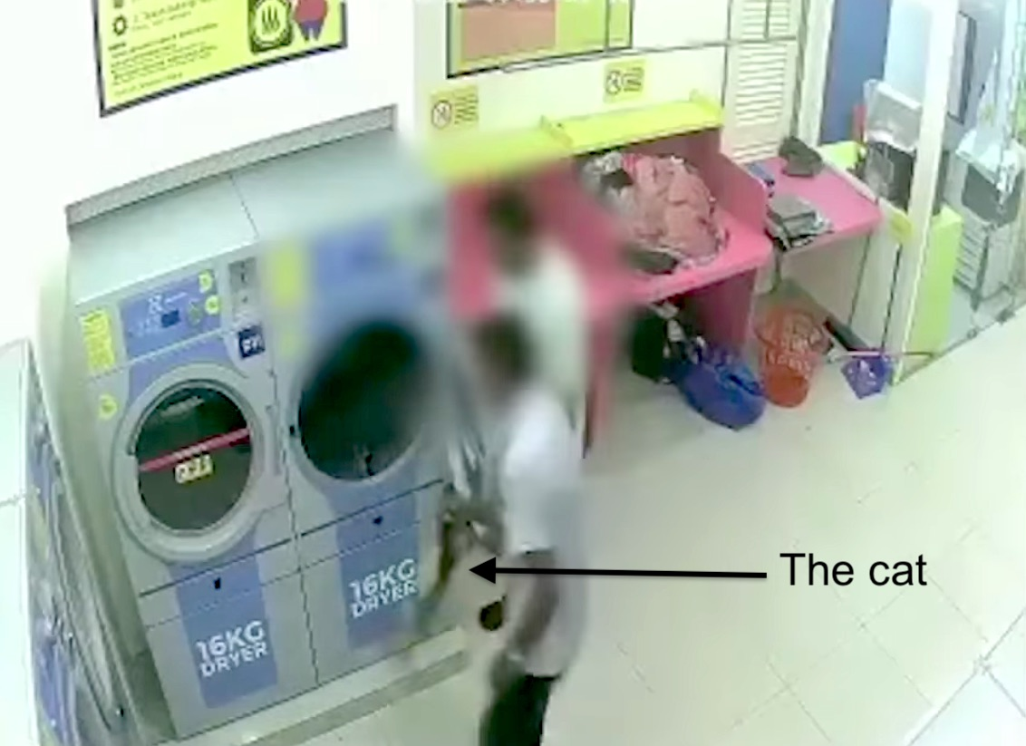 Men put pregnant cat in launderette dryer and push start button