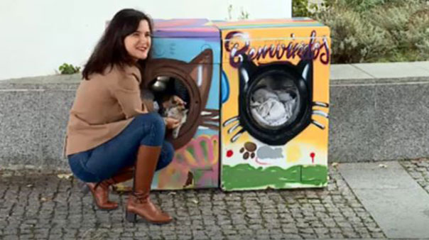 Old washing machines used as stray cat shelters
