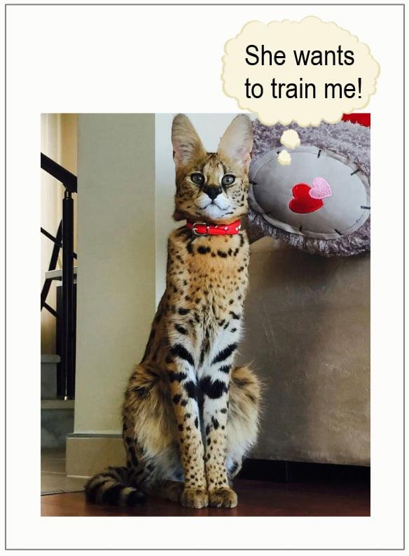 She wants to train me