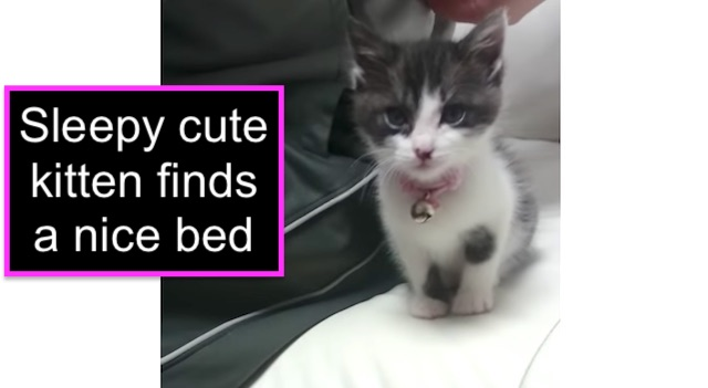 Sleepy kitten finds nice bed