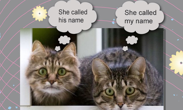 Cats know the sound of their names