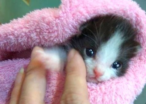 Teenage boys drowned a kitten like this
