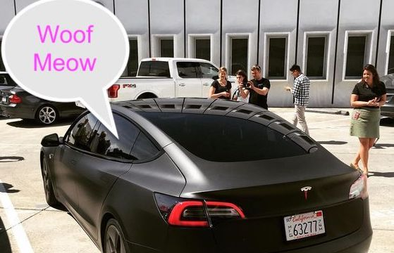 Tesla car with dog mode