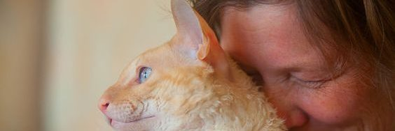 Using foster carers to look after cats owned by victims of domestic violence