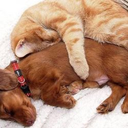 Cat loves dog and dog loves cat
