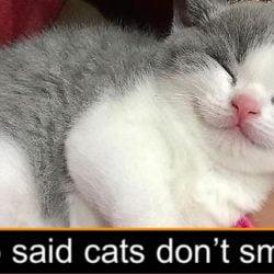Cat smile or feline anatomy?