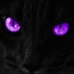 Cat's eyes at night