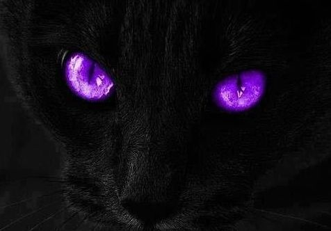 Cat's eyes at night