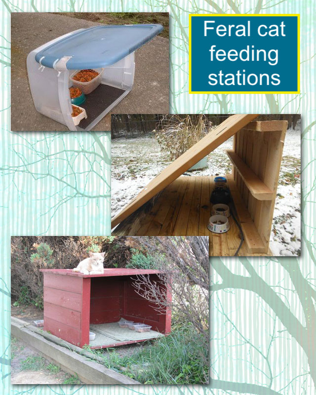 Feral cat feeding stations