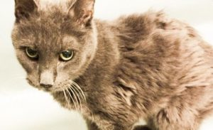 Geriatric cat