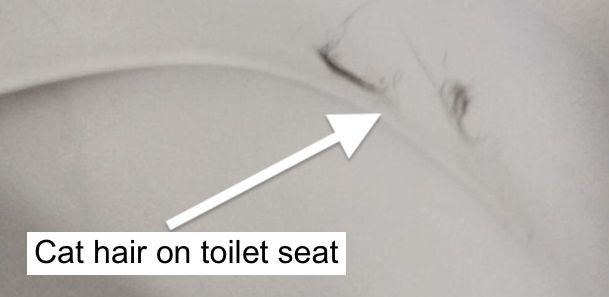 Cat hair on toilet
