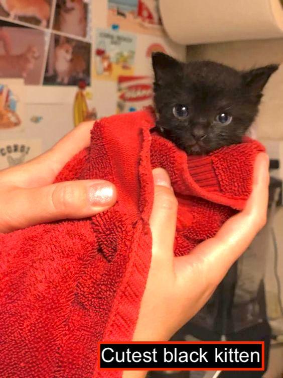 Saved black kitten