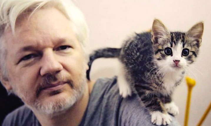 Assange with his cat