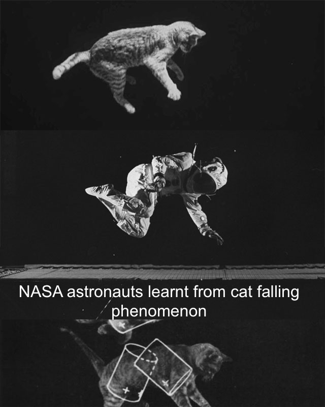 Nasa learns from cat's self-righting reflex