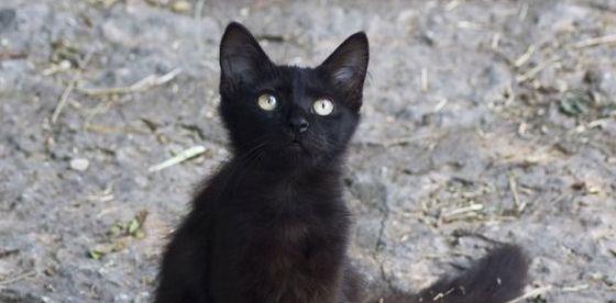 Back cat