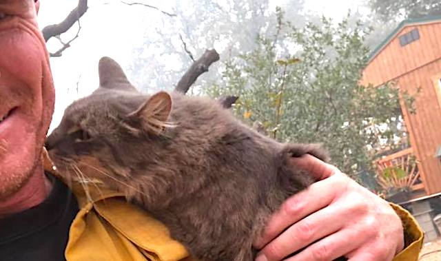 Cat loves firefighter who found her among wreckage of Paradise fire
