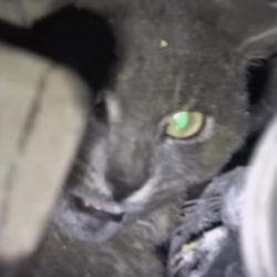 Cat rescue from Paradise Fire