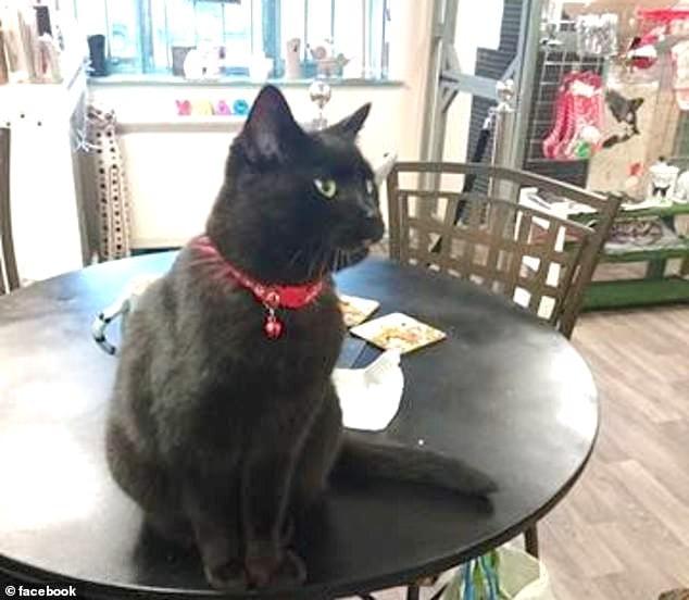 Catastrophe Cat Cafe in Needham Market, Suffolk,