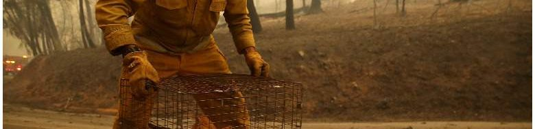 Cats in cage left in road as California fire roared through