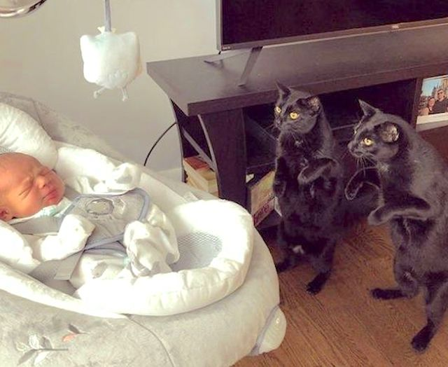 Cats meet baby for first time