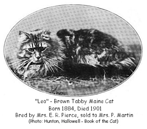 Maine cat won first American cat show in 1895