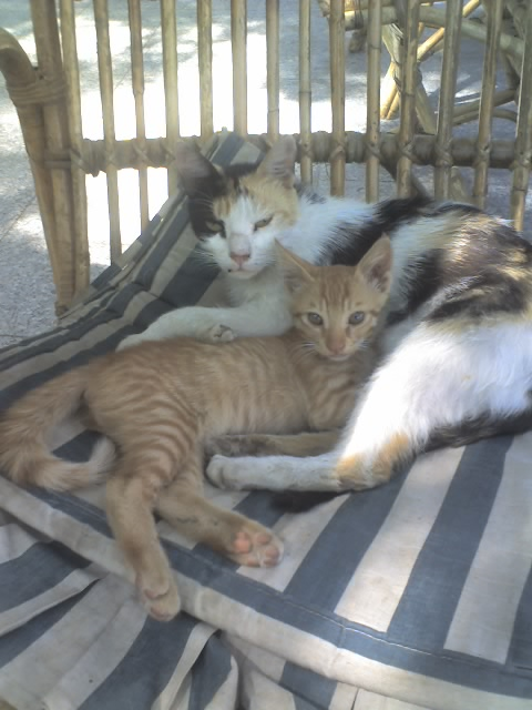 Egypt street cats