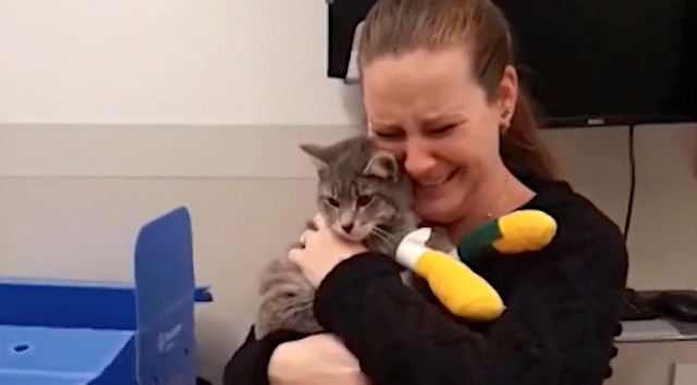Emotional reunion between Camp Fire cat and owner