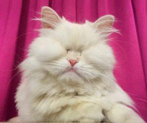 Extraordinary photo of Oman blind cat: Moet