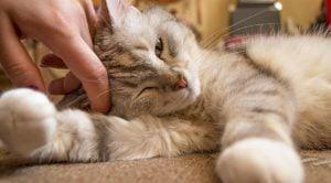 Flat insurance concerning pets
