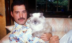 Freddie Mercury with one of his cats: Tiffany